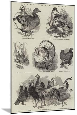 Zoological Society, Prize Poultry--Mounted Giclee Print
