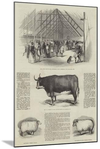 Smithfield Club Prize Cattle Show--Mounted Giclee Print