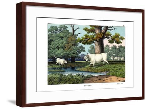 Wild Cattle of Britain, 1860--Framed Art Print