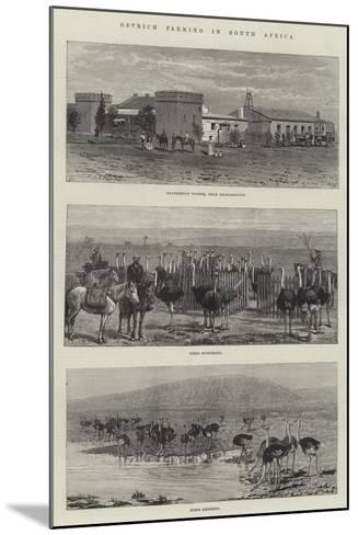 Ostrich Farming in South Africa--Mounted Giclee Print