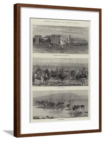 Ostrich Farming in South Africa--Framed Art Print