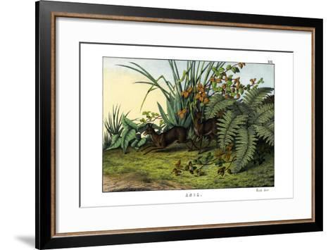 Siberian Musk Deer, 1860--Framed Art Print
