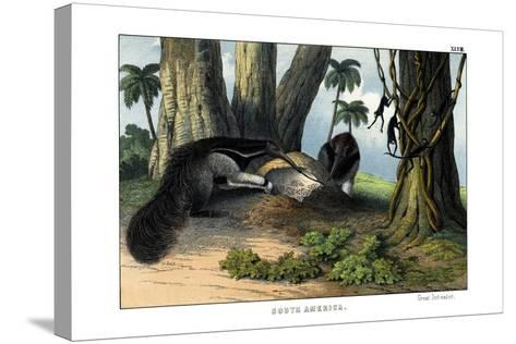 Great Anteater, 1860--Stretched Canvas Print