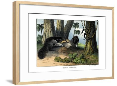 Great Anteater, 1860--Framed Art Print