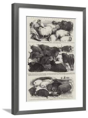Smithfield Club Prizes--Framed Art Print