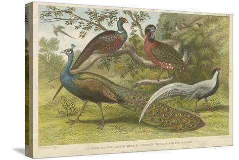 Peacock and Pheasants--Stretched Canvas Print