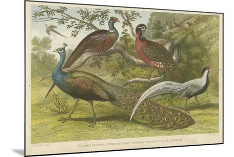 Peacock and Pheasants--Mounted Giclee Print