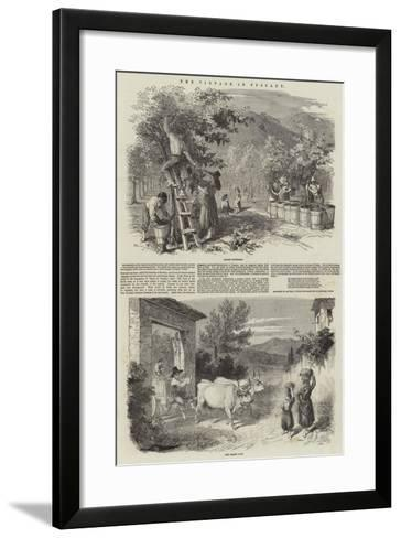 The Vintage in Tuscany--Framed Art Print