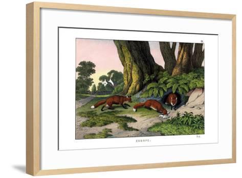 Common Fox, 1860--Framed Art Print