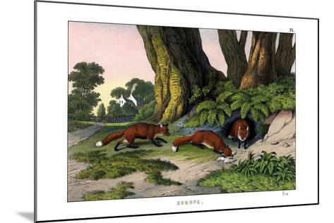 Common Fox, 1860--Mounted Giclee Print