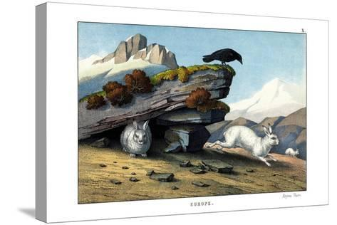 Alpine Hare, 1860--Stretched Canvas Print