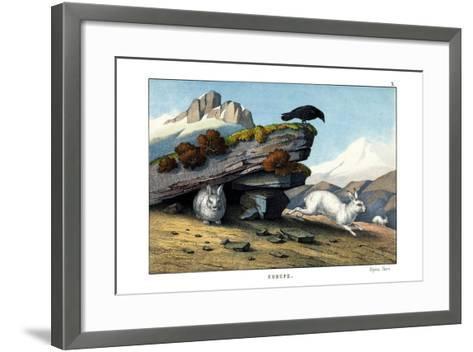 Alpine Hare, 1860--Framed Art Print