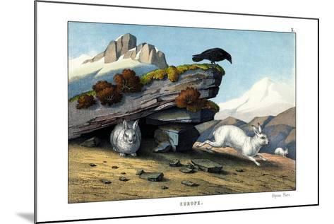 Alpine Hare, 1860--Mounted Giclee Print