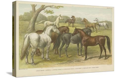 Horses and Ponies--Stretched Canvas Print