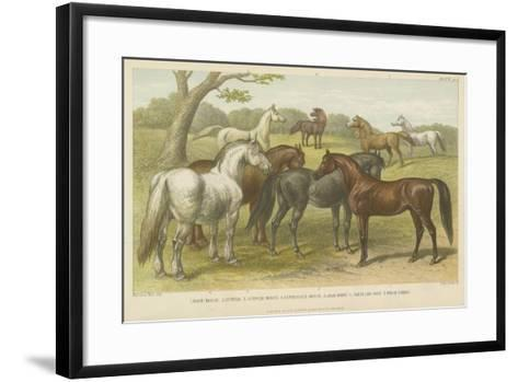 Horses and Ponies--Framed Art Print