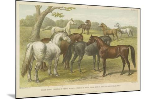 Horses and Ponies--Mounted Giclee Print