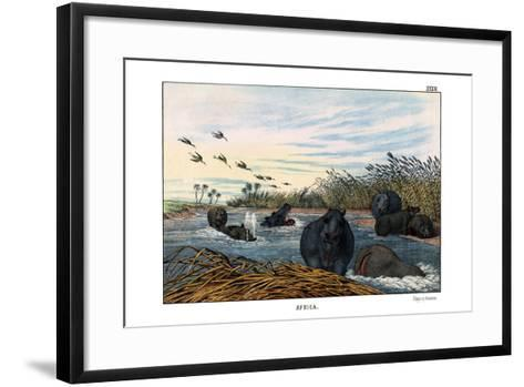 Hippopotamus, 1860--Framed Art Print