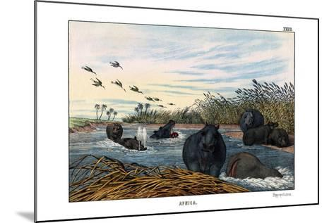 Hippopotamus, 1860--Mounted Giclee Print