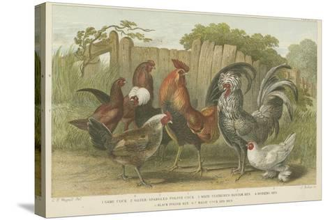 Cocks and Hens--Stretched Canvas Print