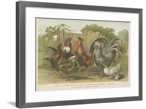 Cocks and Hens--Framed Art Print