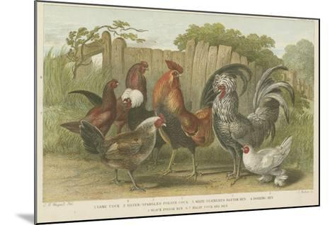 Cocks and Hens--Mounted Giclee Print