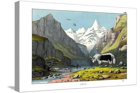 Yak, 1860--Stretched Canvas Print