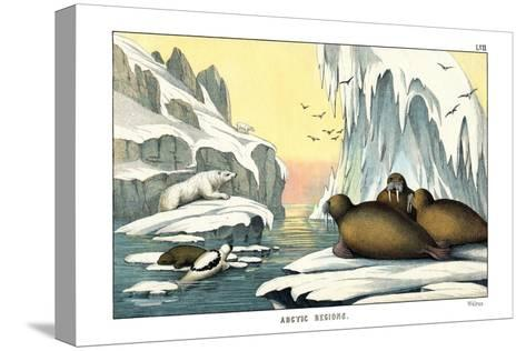 Walrus, 1860--Stretched Canvas Print