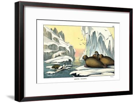 Walrus, 1860--Framed Art Print
