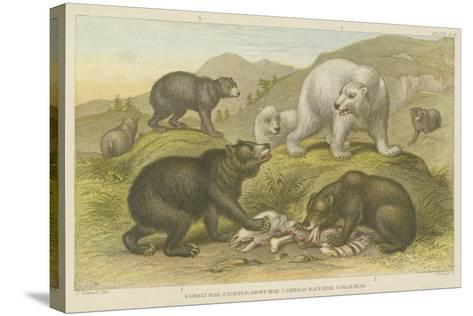 Bears--Stretched Canvas Print