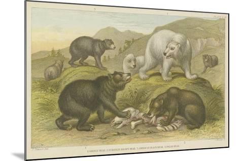 Bears--Mounted Giclee Print