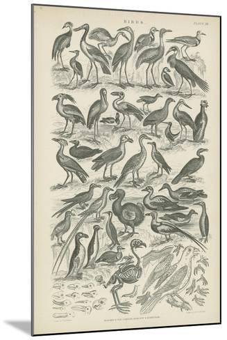 Birds--Mounted Giclee Print