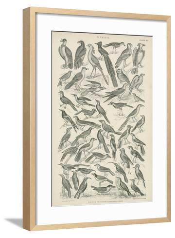 Birds--Framed Art Print