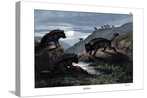 Hyena, 1860--Stretched Canvas Print