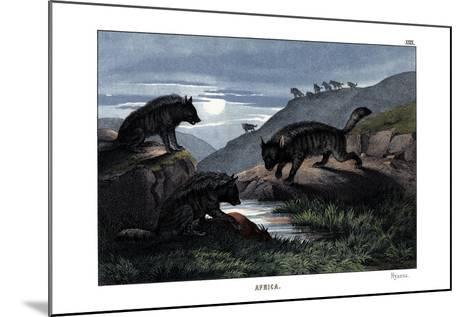 Hyena, 1860--Mounted Giclee Print