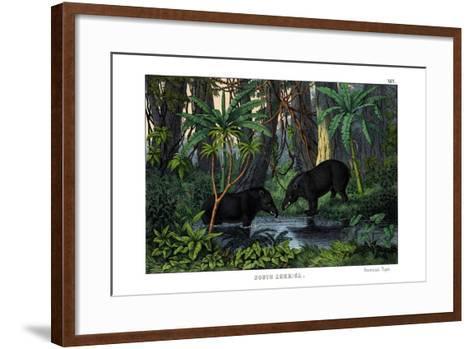 Tapir, 1860--Framed Art Print