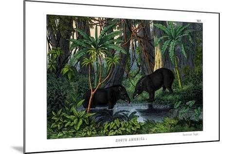 Tapir, 1860--Mounted Giclee Print