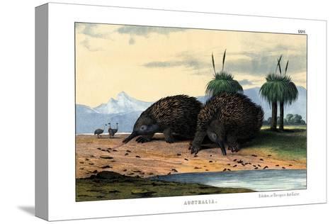 Echidna, 1860--Stretched Canvas Print