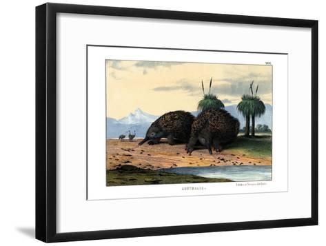 Echidna, 1860--Framed Art Print