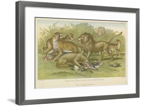 Big Cats--Framed Art Print