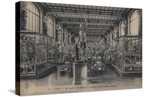Paris, Jardin Des Plantes--Stretched Canvas Print