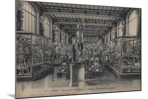 Paris, Jardin Des Plantes--Mounted Giclee Print