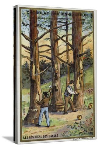 Pine Resin Collectors in the Landes, France--Stretched Canvas Print