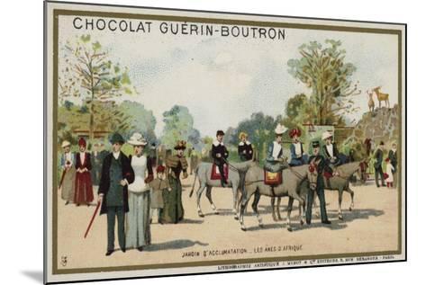 African Donkeys, Jardin D'Acclimation, Paris--Mounted Giclee Print