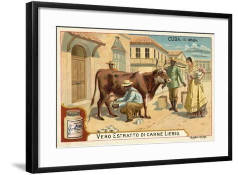 Milking, Cuba--Framed Art Print