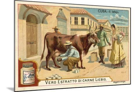 Milking, Cuba--Mounted Giclee Print