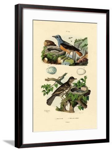 Roufus-Tailed Rock-Thrush, 1833-39--Framed Art Print