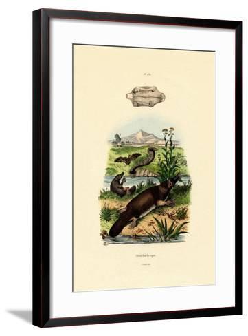 Duck-Billed Platypus, 1833-39--Framed Art Print