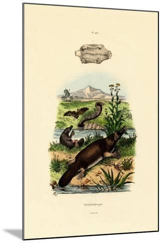 Duck-Billed Platypus, 1833-39--Mounted Giclee Print