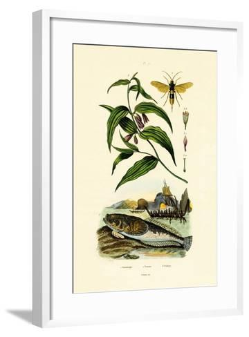 European Stargazer, 1833-39--Framed Art Print
