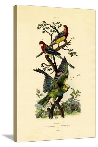 Yellow-Headed Parrot, 1833-39--Stretched Canvas Print